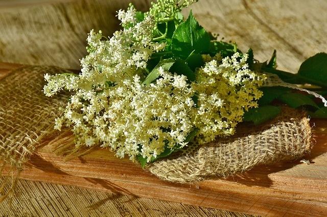 Elderflowers on hessian.