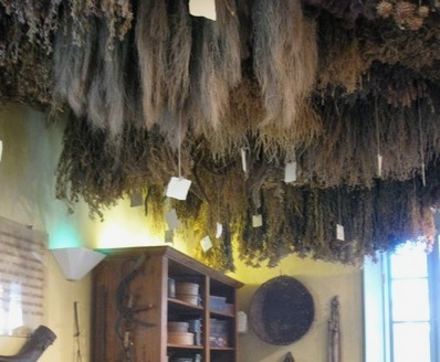Bunches of herbs drying from a ceiling